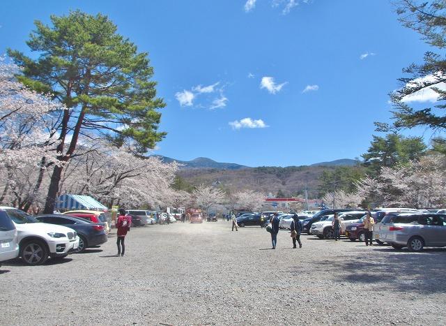 20130503聖光寺の桜満開へ (24)