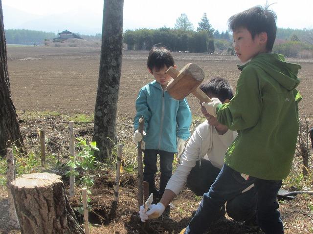 20130506いよいい植樹 (12)