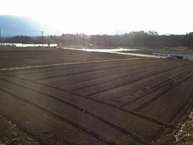 20130427バディアス農園 (2)