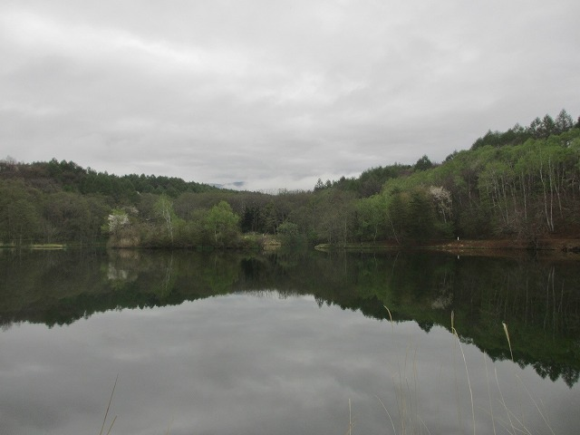 20130511鏡の様な竜神池と桜 (13)