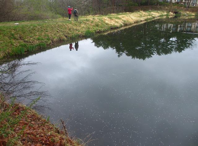 20130511鏡の様な竜神池と桜 (23)