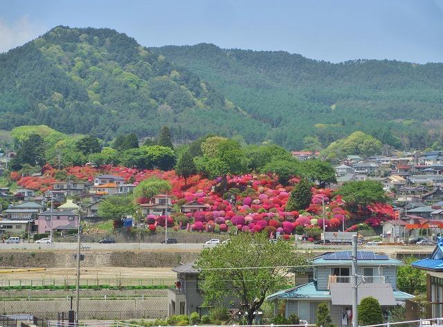 20130516鶴嶺公園のツツジ (1)