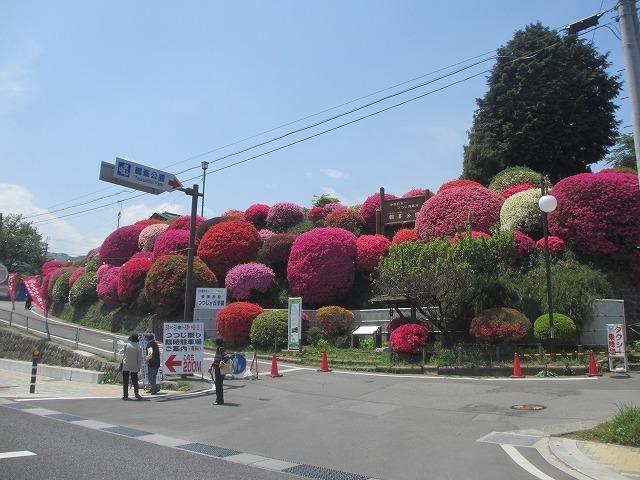 20130516鶴嶺公園のツツジ (3)