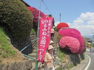 20130516鶴嶺公園のツツジ (6)