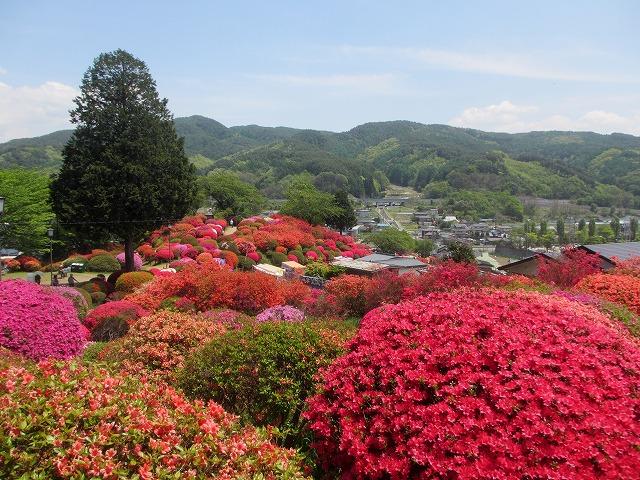 20130516鶴嶺公園のツツジ (25)