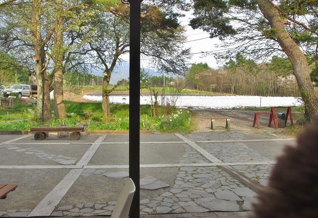 20130514ウラシマ草 (5)