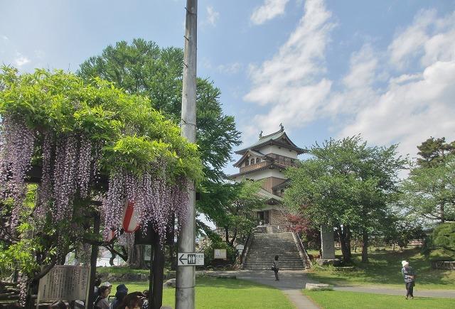 20130516高島城藤まつり (5)