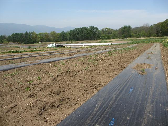 20130518バディアス農園始動 (9)