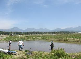 20130518田植えの風景 (24)