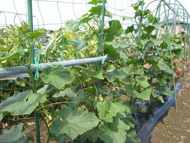 20130521木南農園 (4)