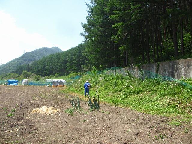 20130526そば畑 (1)