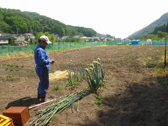 20130526そば畑 (18)