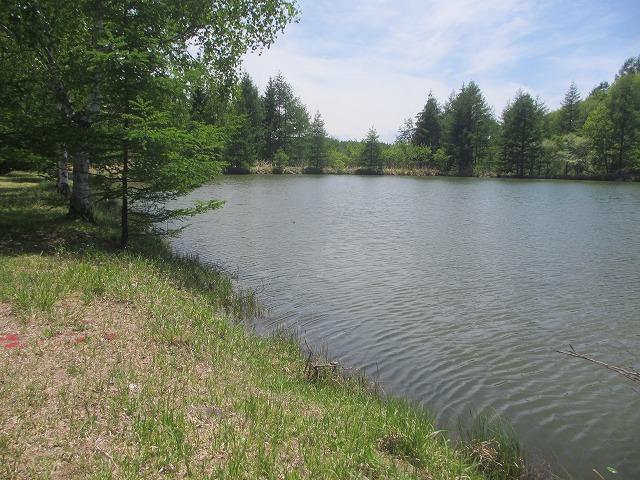20130604謎の池 (25)