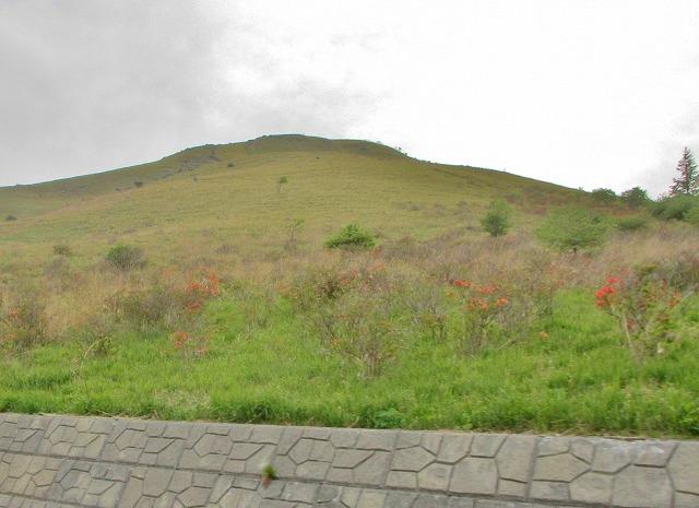 20130609車山のレンゲツツジ (4)