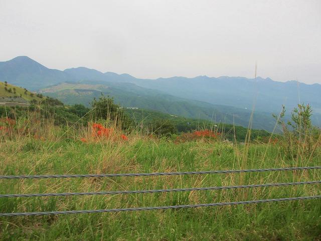 20130609車山のレンゲツツジ (9)
