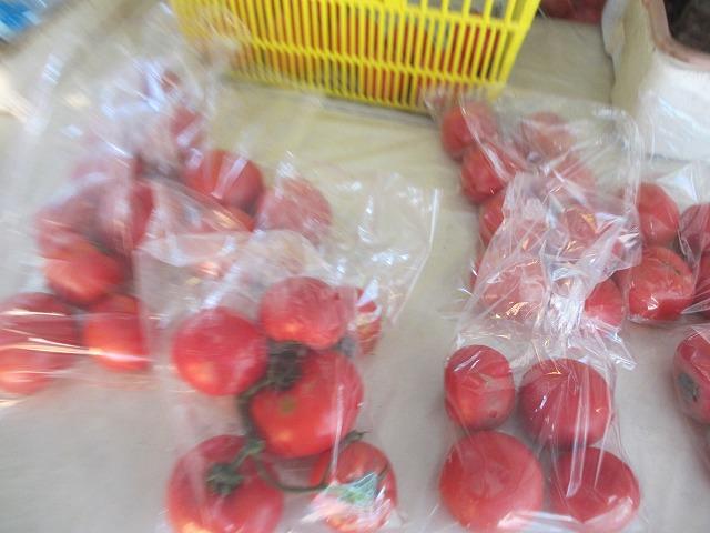 201306010宮坂農園のトマト (6)