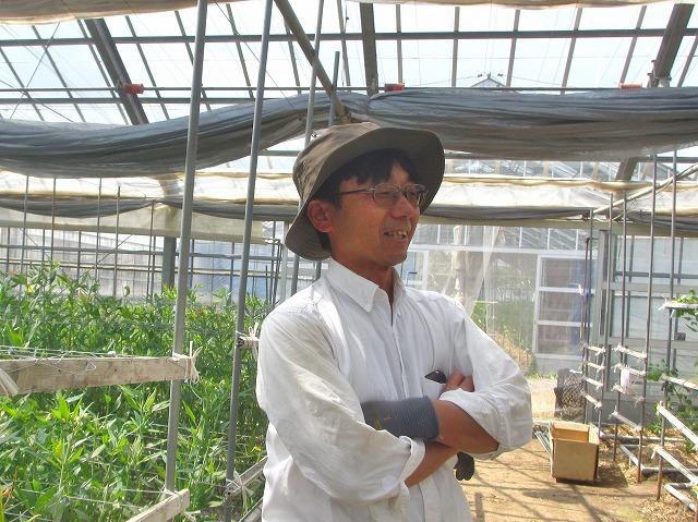 20130629トマト大きく育ってます (21)