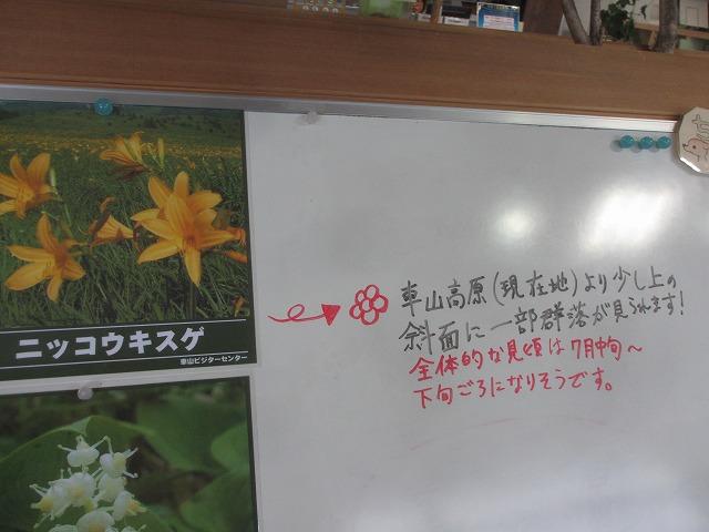 20130706コバイケイソウ (1)