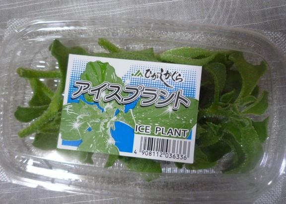 iceplantack.jpg