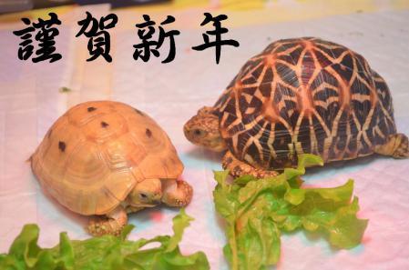 ちょん&ファイ 謹賀新年