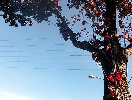 花水木の色づき