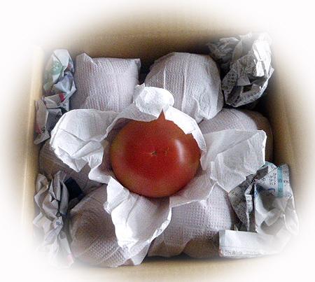 トマトたくさん!