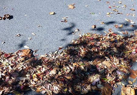 落ち葉吹き溜まり
