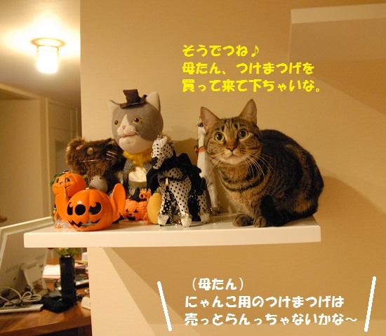 2014年10月28日④