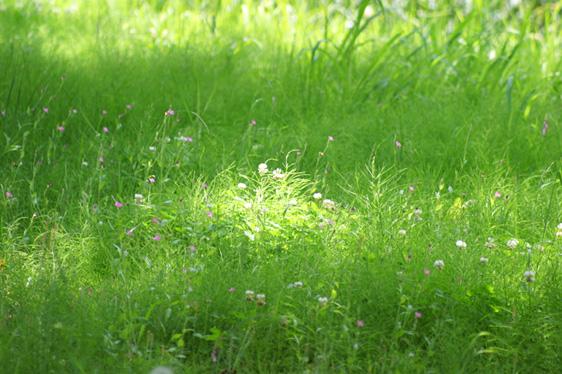 夏の庭 草いきれ