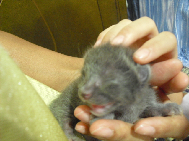 kitten01jun