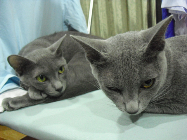 toro&momo2