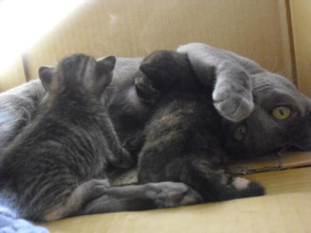 kitten&mei