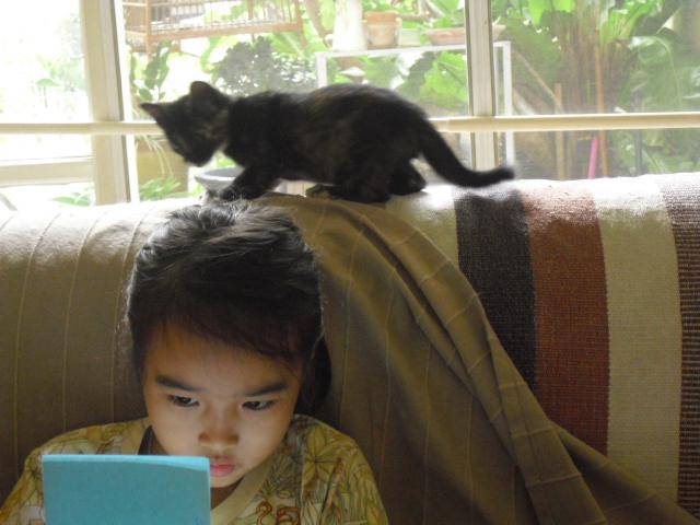 kitten&ran1