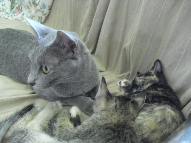 momo&kitten2