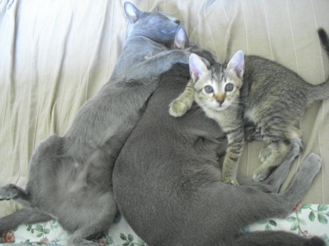 mei&momo&kitten