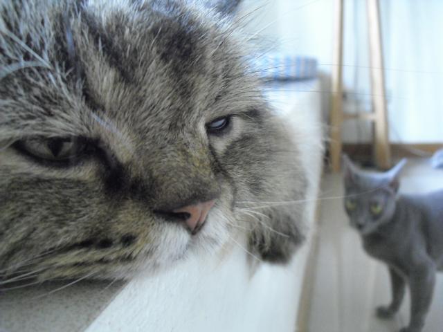 baimon&mei