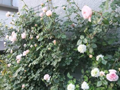 DSCF7846_convert_20120509194242.jpg