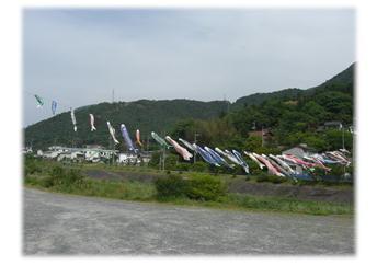5.20 三篠川を元気良く泳いでましたw