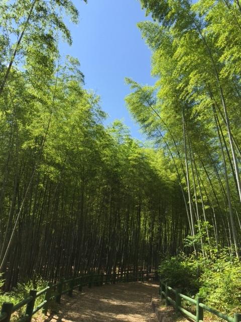 takenokomichi.jpg