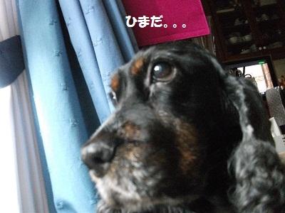 2012_1124~2012夏0018