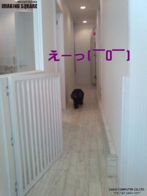 is_0011e5c812cd_convert_20120604092625.jpg