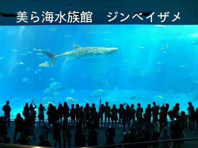 美ら海水族館ジンベイザメ