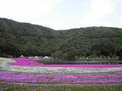 芝桜・09
