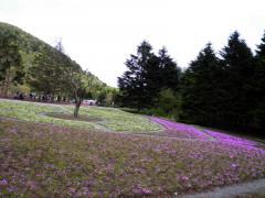芝桜・01