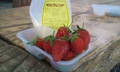 イチゴ・ツー・08