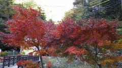 秋の甲州・01