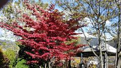 秋の甲州・04