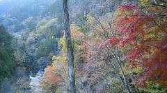 吊り橋~道志・09