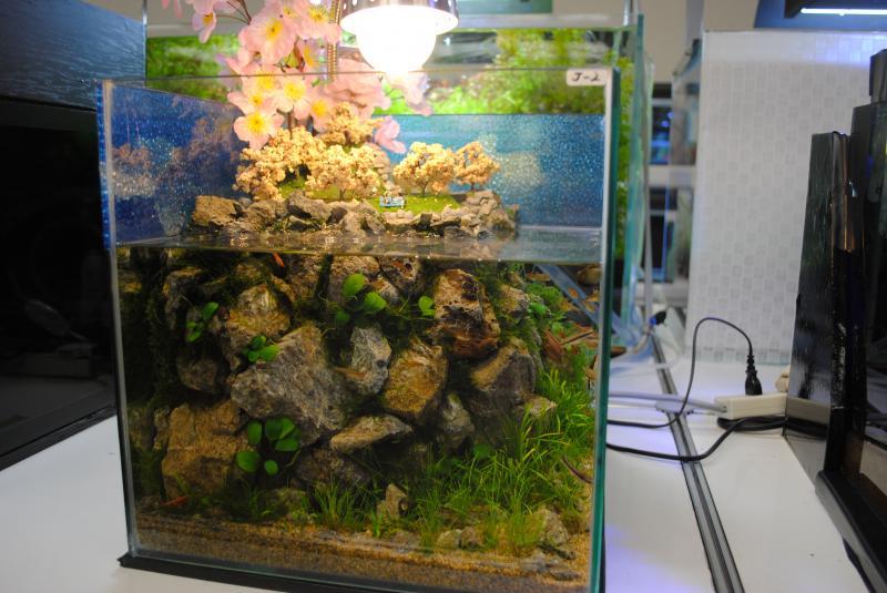 2012日本鑑賞魚フェアアクアテラリウム5