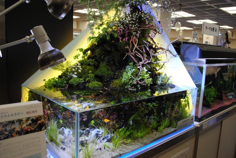 2012日本鑑賞魚フェアアクアテラリウム1